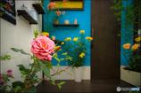 Entrance ~薔薇のある家~