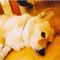 その他のカメラメーカー その他のカメラで撮影した動物(chappy is sleeping)の写真(画像)