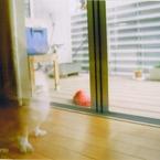 その他のカメラメーカー その他のカメラで撮影した動物(消えないで。。。)の写真(画像)