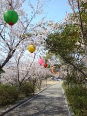 2012sakurazaka