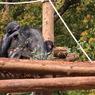 CANON Canon EOS 50Dで撮影した(双子のチンパンジー)の写真(画像)