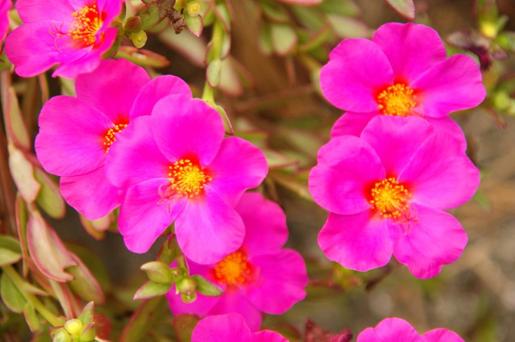 太陽に強い花