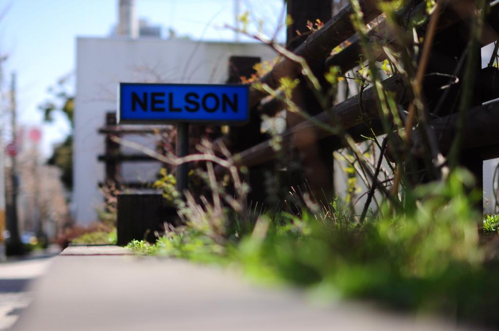 Niygata walk -NELSONー だいま