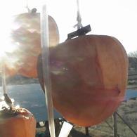 VICTOR GZ-MG50で撮影した風景(光をいっぱい)の写真(画像)