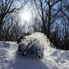 護摩壇山の雪遊び