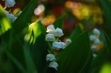 鉢植えひとつの花畑