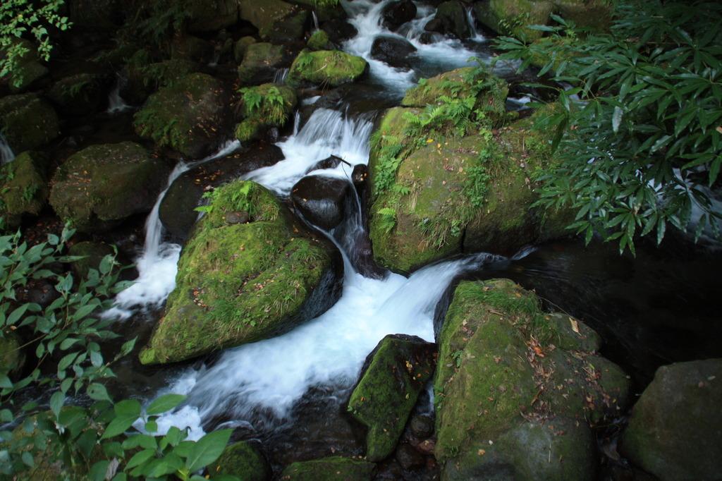 苔生した岩
