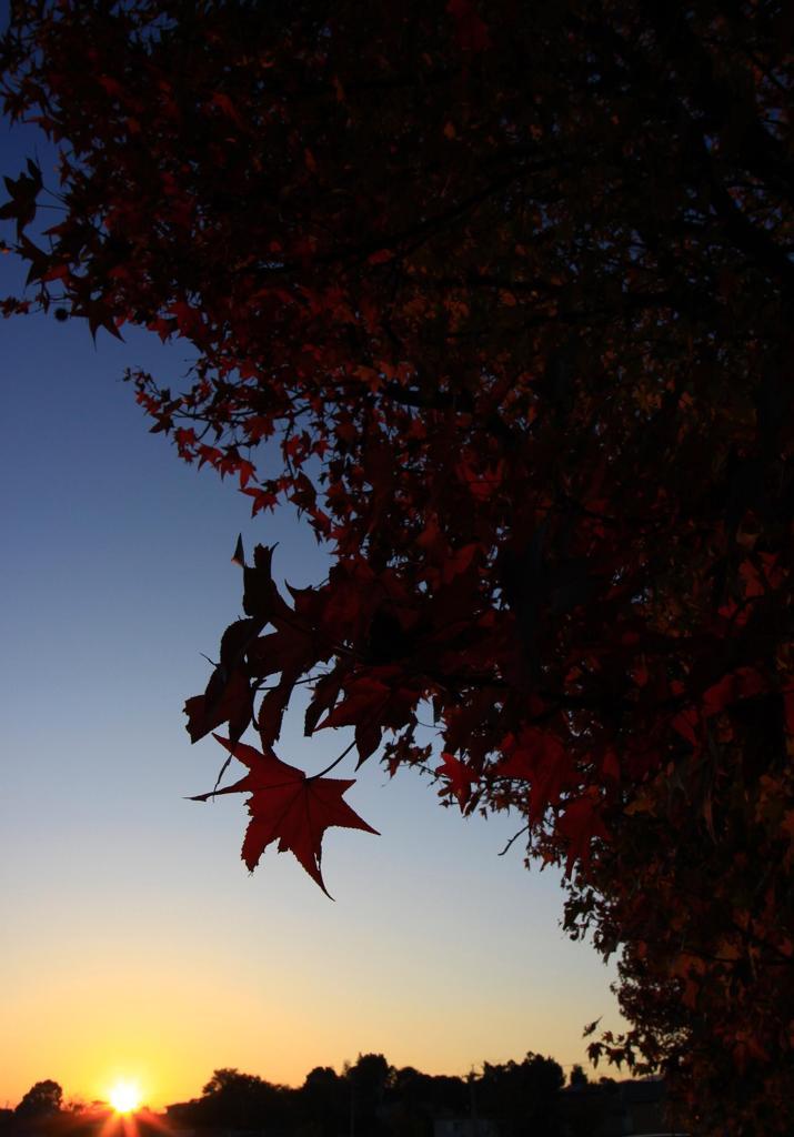 照らされる紅葉