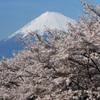 日本の桜風景
