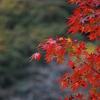 今年初の紅葉狩り