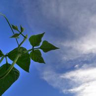 PANASONIC DMC-LX3で撮影した風景(豆の木雲を掴む)の写真(画像)