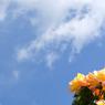 CANON Canon EOS 20Dで撮影した植物(見上げる青空の下に)の写真(画像)