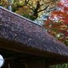 屋根にも秋の趣