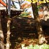木洩れ日と落ち葉の参道