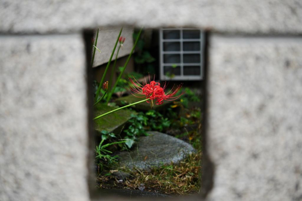 トラ子の玄関から覗く曼殊沙華