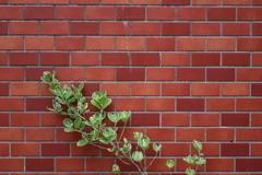 惹かれた壁の景観