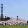 あの上から撮ってみたい桜並木