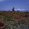 FUJIFILM GS645S Professionalで撮影した風景(甘利山の思い出)の写真(画像)