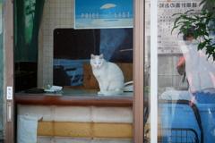 店番をする白いネコを撮る人