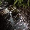 玉川上水秋の陽に輝く