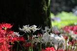白花と紅花のある景色