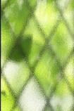 朝の光で緑を映す窓