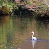枯葉舞う秋の池
