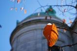 表慶館と初冬の残り葉
