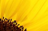 花びら、ラインの美