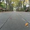 落ち葉の中に並ぶベンチ
