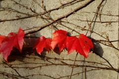 ブロック塀の秋
