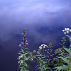 FUJIFILM GS645S Professionalで撮影した(湿原の夏空)の写真(画像)