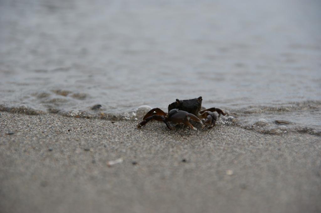 かに、カニ、蟹