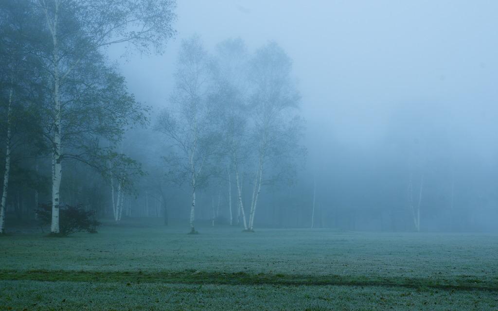 朝靄の中で