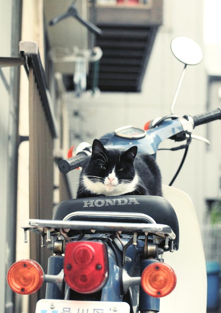 オイラのバイク