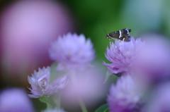 紫の国のお姫様
