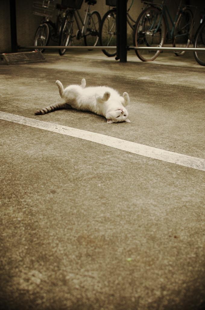 ひっくり返る猫