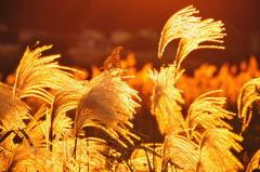 秋は暮れゆく・・・