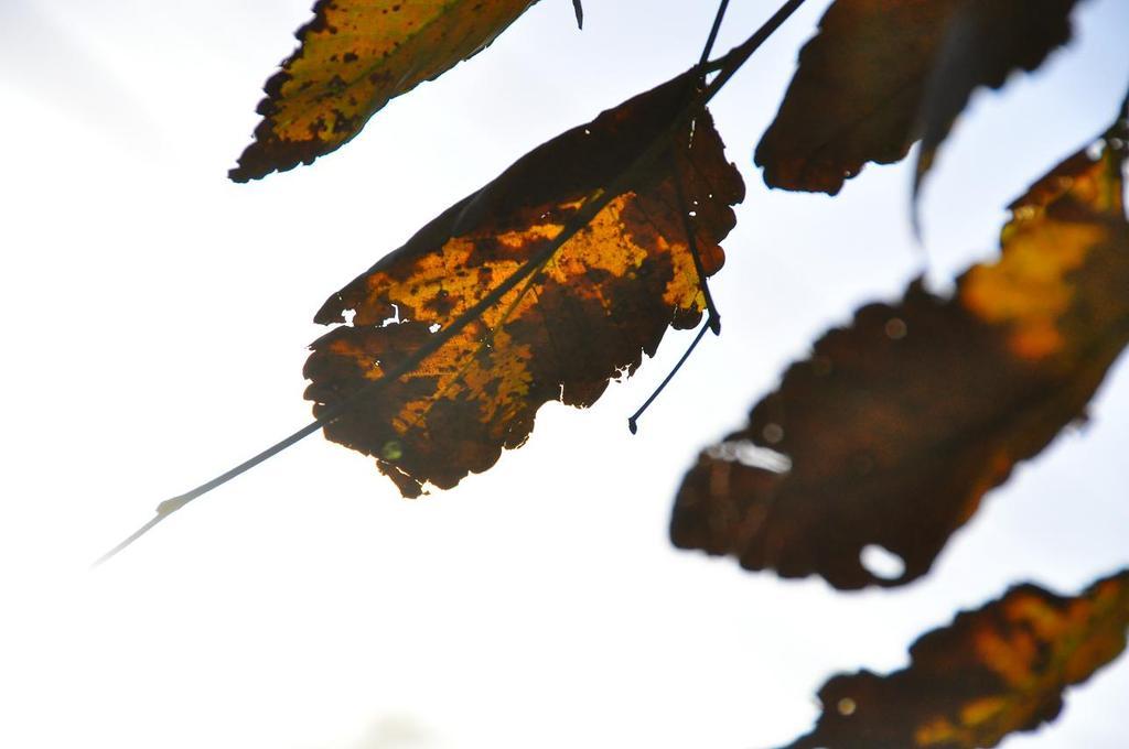 見上げたら秋