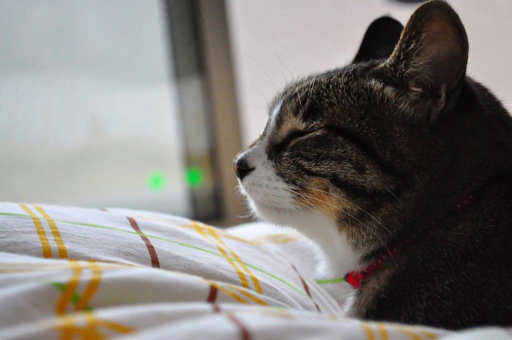 お昼寝  気持ちいいにゃ~♪♪