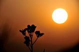 太陽と花のおしゃべり