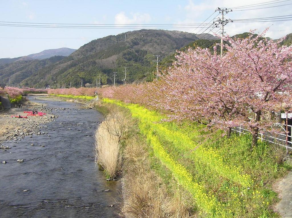 川とさくら