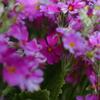 埋もれる花