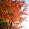 燃え盛る紅葉