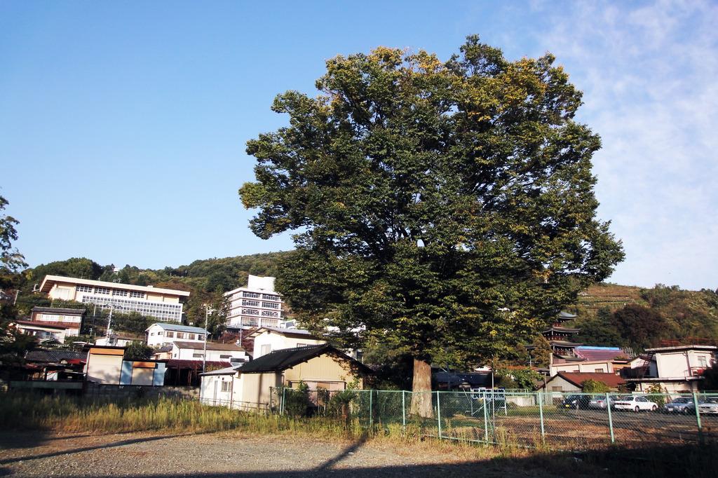 ookinaki