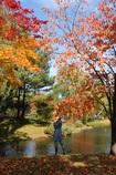 日本の秋?