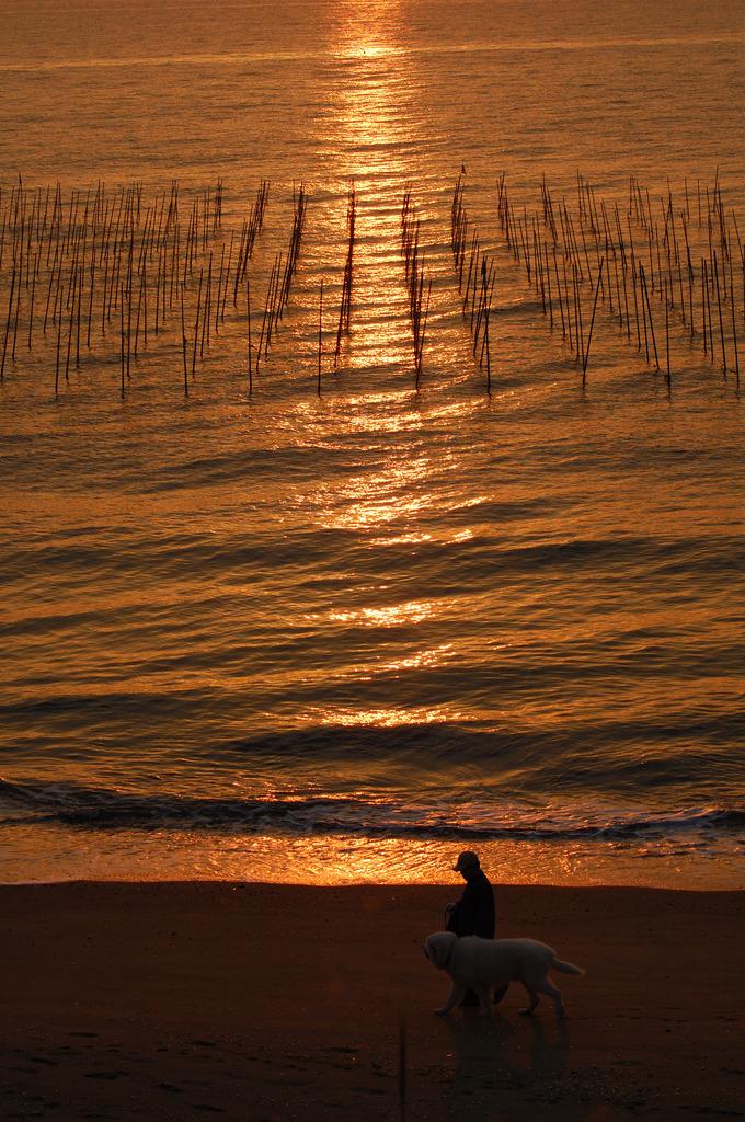 浜辺のお散歩