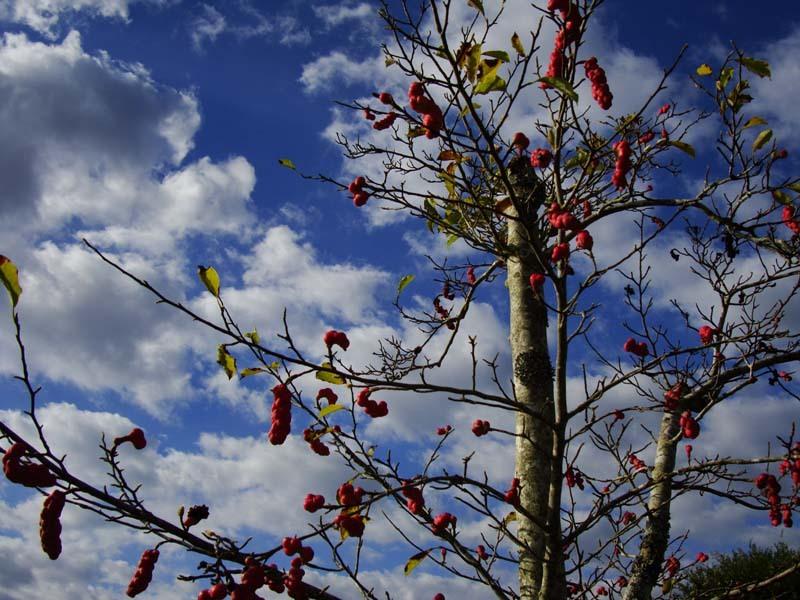 臓物の成る木−2