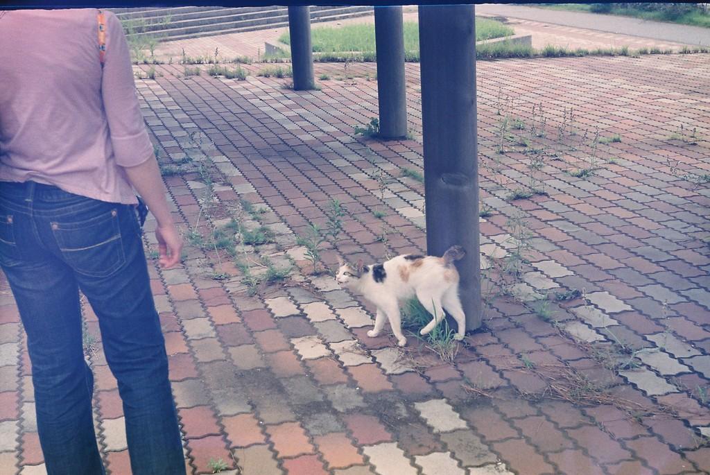 ネコと写真仲間