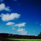 NIKON NIKON D70で撮影した(田んぼと青空)の写真(画像)